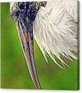 Woodstork Portrait Canvas Print