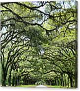 Wormsloe Plantation Entrance Canvas Print
