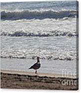 Wounded Seagull 4 Seagulls Birds Photos Beach Beaches Sea Ocean Oceanview Scenic Seaview Art Pics Canvas Print