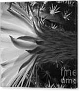 Woven Flower Bw Canvas Print