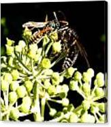 Wrangling Wasps Canvas Print