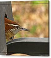 Wren Peeking Out Canvas Print