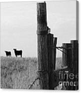 Wyoming Fence Line Canvas Print