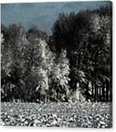 Wyoming Snowstorm October 2011 Canvas Print