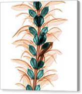 X-ray Of An Acanthus Flower Canvas Print