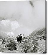 Yak In The Himalaya Canvas Print