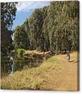Yarkon Park  And River Yarkon Canvas Print