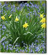 Yellow And Blue Flowers Canvas Print