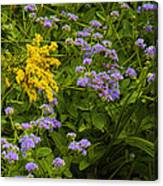 Yellow And Violet Flowers Canvas Print