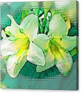 Yellow Aqua Weigela Art Canvas Print