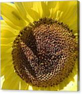 Yellow Autumn Sunflower Canvas Print