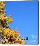 Yellow Autumn Tree Canvas Print