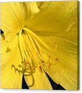 Yellow Beams Canvas Print