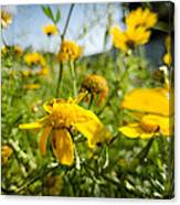Yellow Blooming Wildflowers Canvas Print