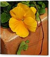 Yellow Blossom On Planter Canvas Print