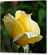 Yellow Bud Canvas Print