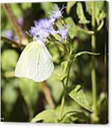 Yellow Butterfly Feeding On Violet Flower Canvas Print
