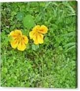 Yellow Couplet Canvas Print