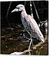 Yellow Crowned Night Heron II Canvas Print