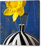 Yellow Daffodil In Striped Vase Canvas Print