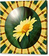 Yellow Daisy Energy Canvas Print