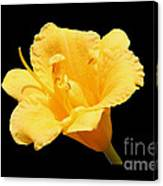 Yellow Day Lily On Black Canvas Print