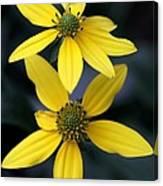 Yellow Duet Canvas Print