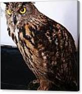 Yellow-eyed Owl Side Canvas Print