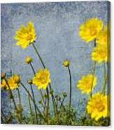 Yellow Flower Blossoms Canvas Print