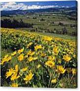 Yellow Flowers Blooming, Hood River Canvas Print