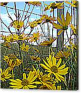 Yellow Flowers By The Roadside Canvas Print