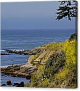 Yellow Flowers On The Central California Coast Canvas Print