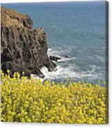 Yellow Flowers On The Northern California Coast Canvas Print