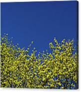 Yellow Flowers Tree Canvas Print