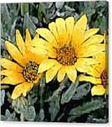 Yellow Gazanias Canvas Print