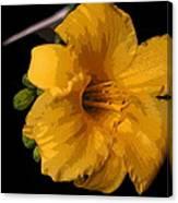 Yellow Glory Canvas Print