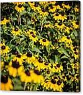 Yellow Golden Flowers 3 Canvas Print