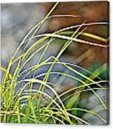 Yellow Grass Canvas Print