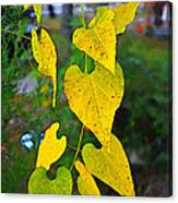 Yellow Heart Leaves  Photoart I Canvas Print
