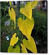 Yellow Heart Leaves Photoart II Canvas Print