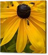 Yellow In Nature Canvas Print