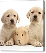 Yellow Labrador Retriever Pups Canvas Print