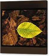 Yellow Leaf Canvas Print