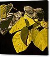 Yellow Leaves On A Tree Branch Canvas Print