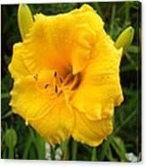 Yellow Lily - Oshun Canvas Print