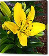 Yellow Lily Beauty Canvas Print