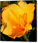 Yellow Lily2 Canvas Print