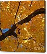Yellow Maple Branch Canvas Print