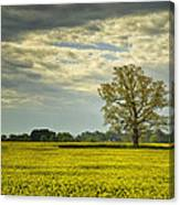 Yellow Meadow Canvas Print