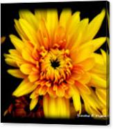 Yellow Mum Canvas Print